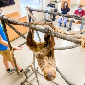 Sloth Encounter at Jenkinson's Aquarium