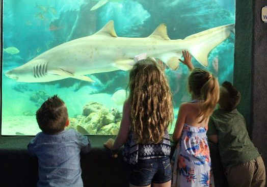 Photo of Jenkinsons Aquarium Shark Tank